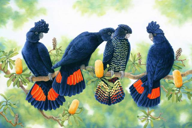 Red-Tailed-Black-Cockatoos-painting